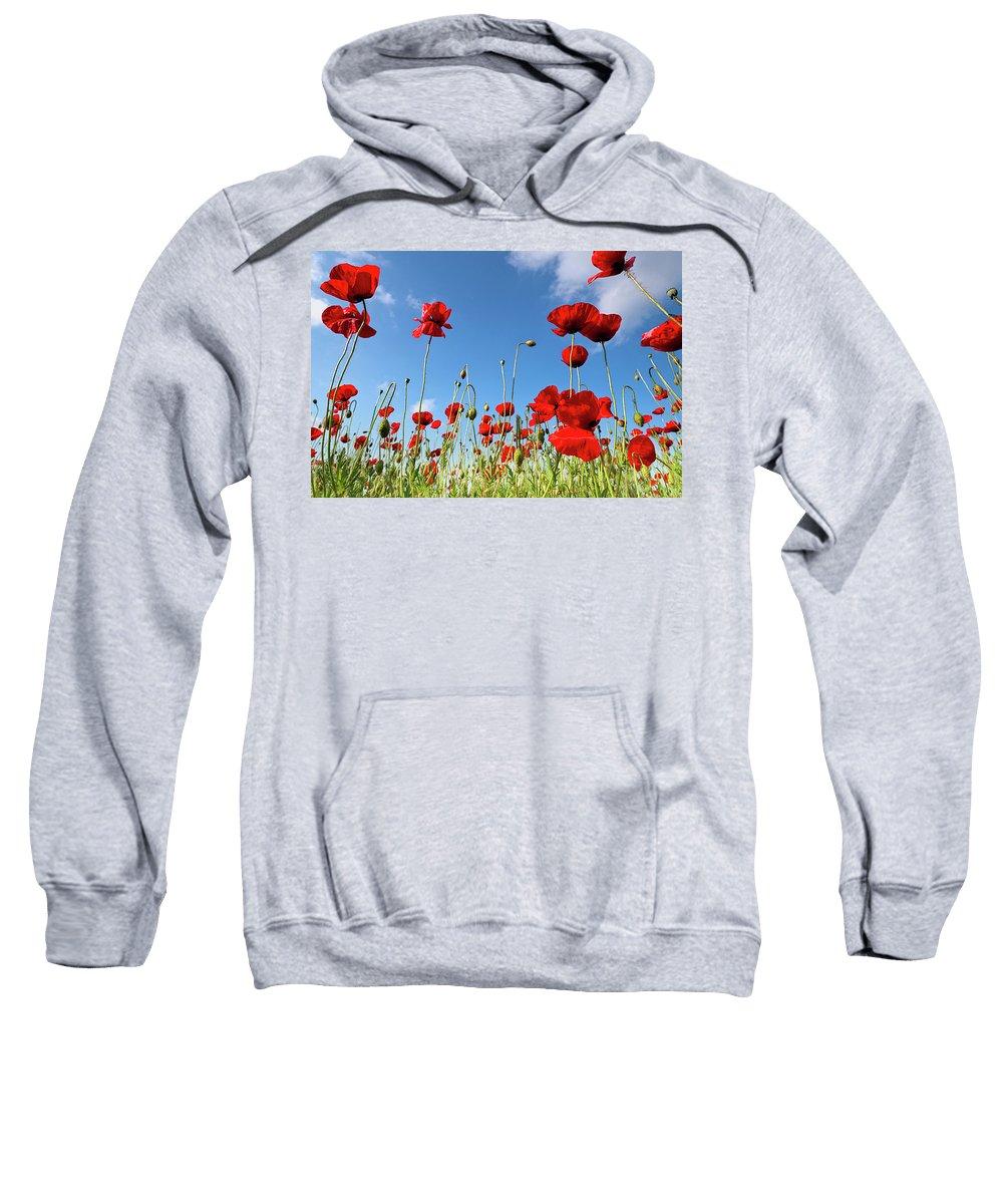 Poppy Sweatshirt featuring the photograph Poppies Season by Evgeni Dinev
