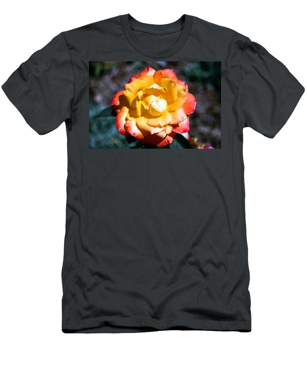 Rose Men's T-Shirt (Athletic Fit) featuring the photograph Red Tipped Yellow Rose by Dean Triolo