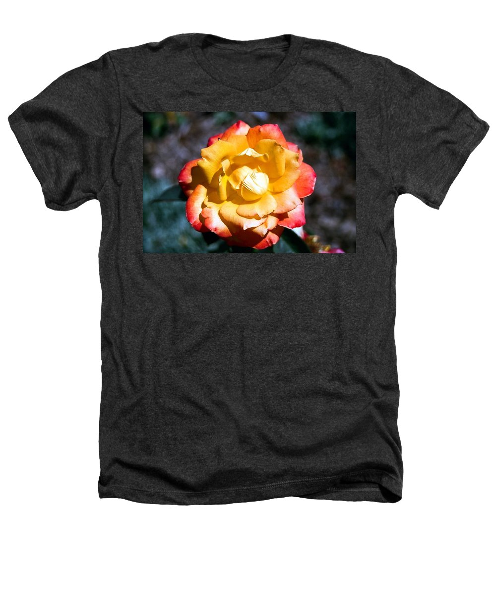 Rose Heathers T-Shirt featuring the photograph Red Tipped Yellow Rose by Dean Triolo
