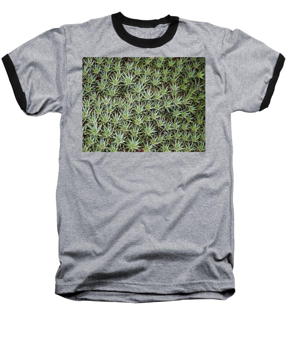 Cactus Baseball T-Shirt featuring the photograph Feild Of Stars by Dean Triolo