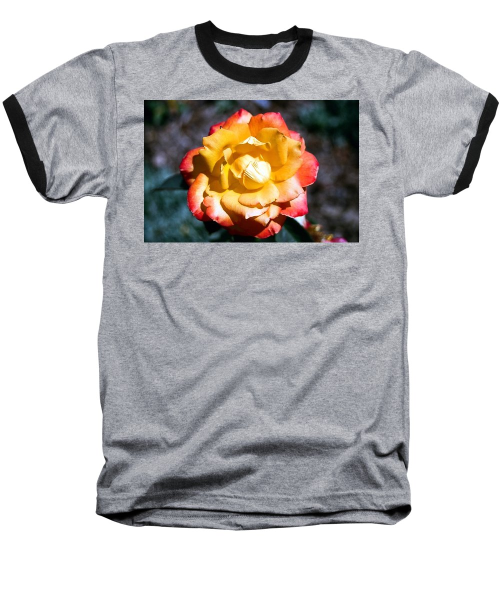Rose Baseball T-Shirt featuring the photograph Red Tipped Yellow Rose by Dean Triolo