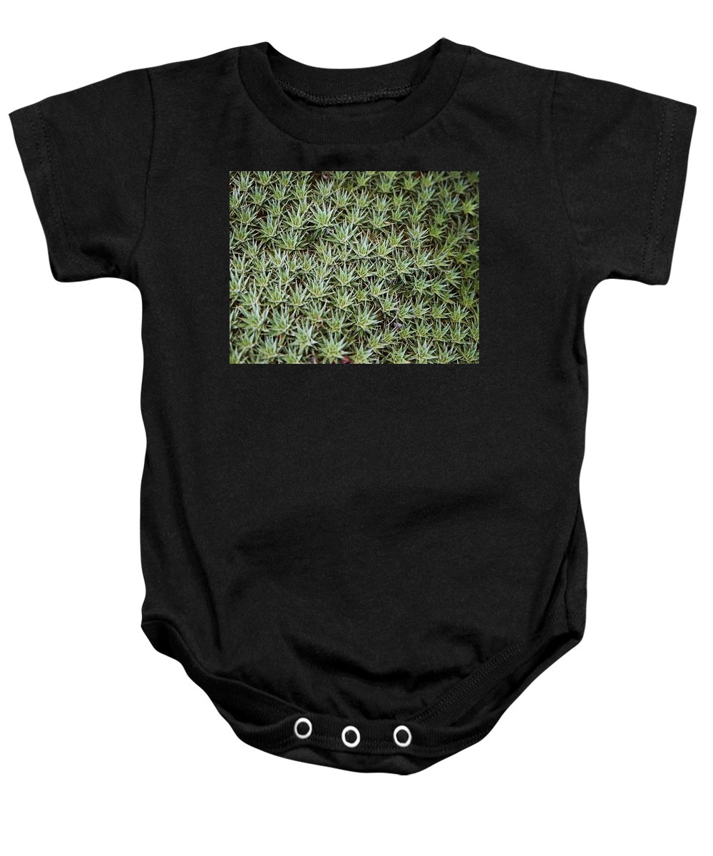 Cactus Baby Onesie featuring the photograph Feild Of Stars by Dean Triolo