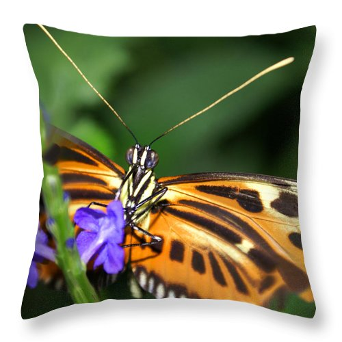 Butterfly Throw Pillow featuring the photograph Butterfly 2 Eucides Isabella by Heather Coen