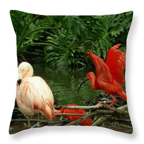 Birds Throw Pillow featuring the photograph Flamingo And Scarlet Ibis by Carol Turner