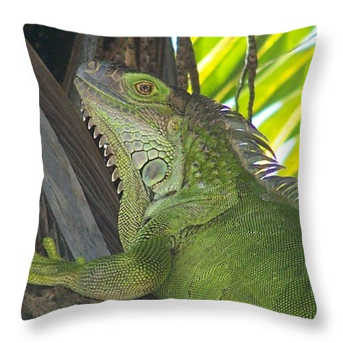 Iguano Throw Pillow featuring the photograph Iguana Puerto Rico by Marilyn Holkham
