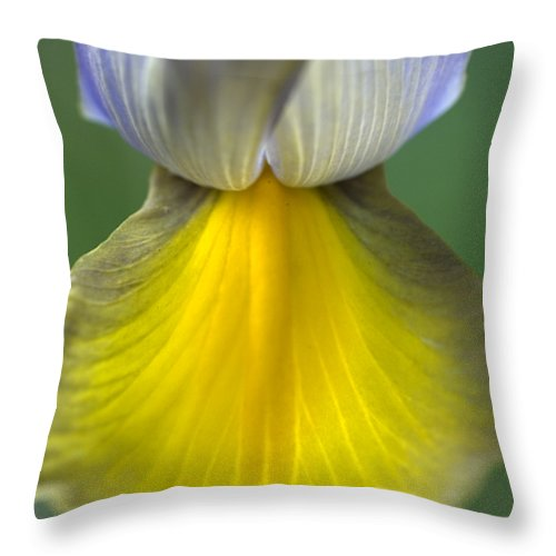 Iris Throw Pillow featuring the photograph Iris by Jessica Wakefield