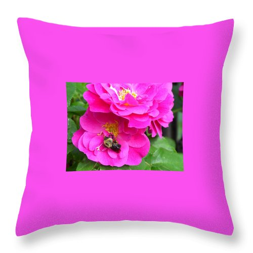 Charity Throw Pillow featuring the photograph Jc And Bee by Mary-Lee Sanders