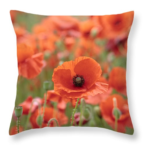 Poppy Throw Pillow featuring the photograph Poppies H by Phil Crean