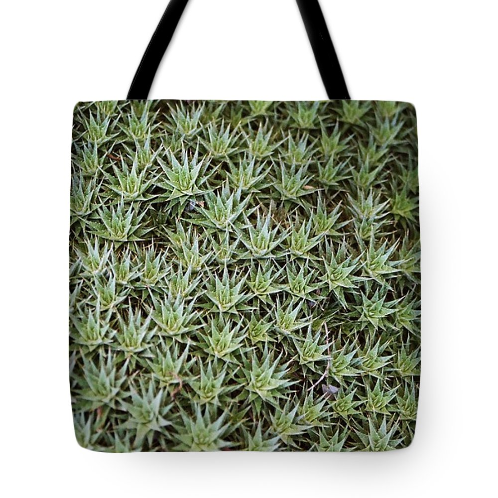 Cactus Tote Bag featuring the photograph Feild Of Stars by Dean Triolo
