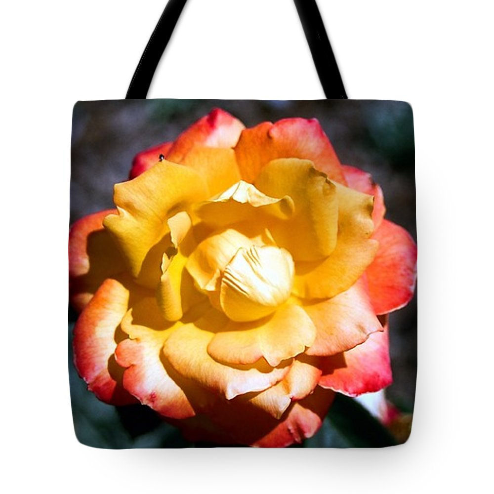 Rose Tote Bag featuring the photograph Red Tipped Yellow Rose by Dean Triolo