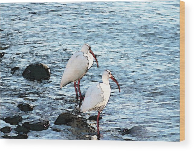 White Wood Print featuring the digital art A Pair Of White Isbis Standing In The Shore by Christopher Purcell