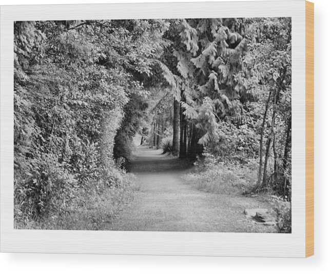Tunnel Wood Print featuring the photograph Forest Tunnel by J D Banks