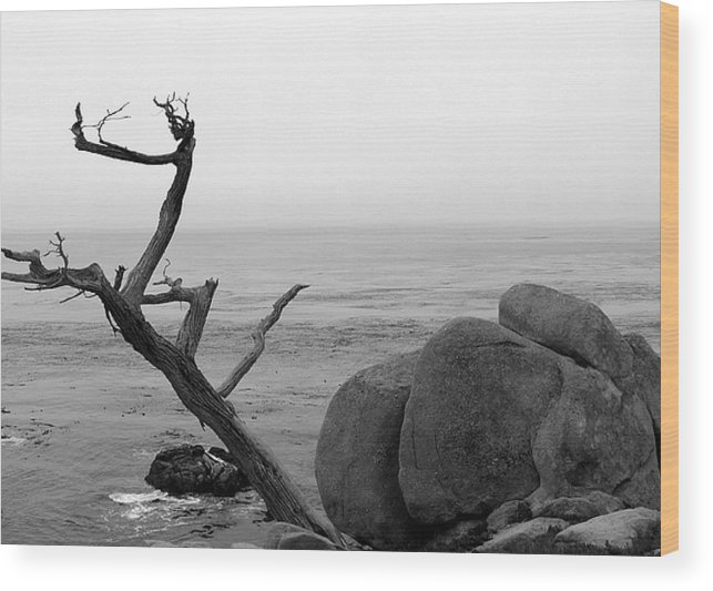 Tree Wood Print featuring the photograph Tree And Boulder by Kenna Westerman