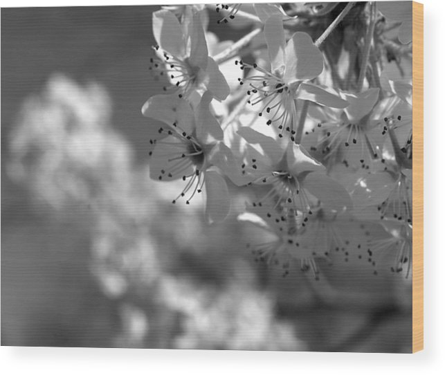 Flowers Wood Print featuring the photograph Blossoms by Jessica Wakefield