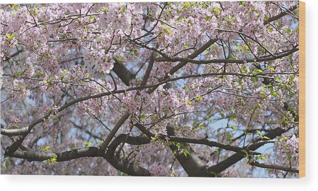 Lincoln Memorial Wood Print featuring the photograph Cherry Blossom Tree by Wendy Fike