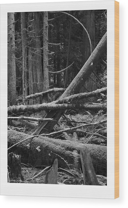 Black Wood Print featuring the photograph Natural Forest by J D Banks