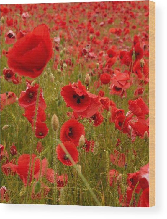 Lehtokukka Wood Print featuring the photograph Red Poppies 4 by Jouko Lehto