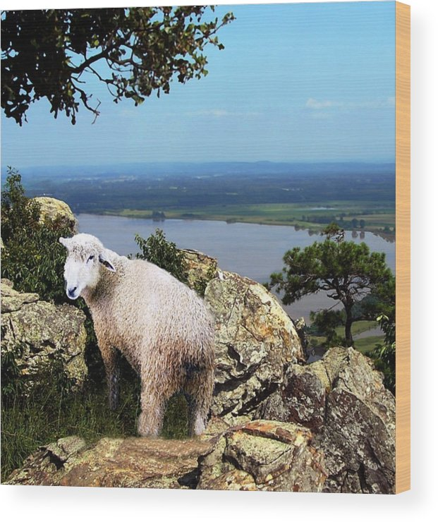 Sheep Wood Print featuring the digital art Lost Sheep by Kenna Westerman
