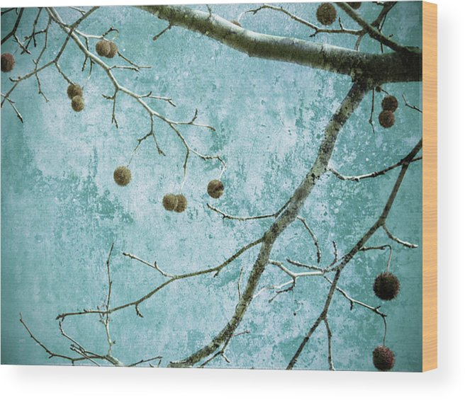 Branches Wood Print featuring the photograph Branched by Tara Turner