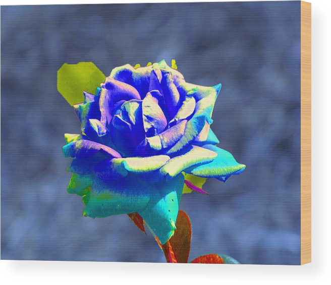 Electric Blue Rose Wood Print featuring the photograph Electric Rose by Randie Lee