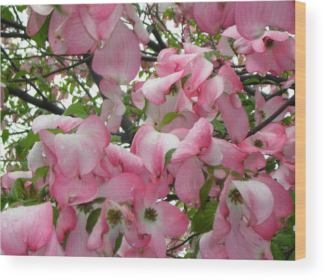 Flowers Wood Print featuring the photograph Magnolias by Heather Weikel
