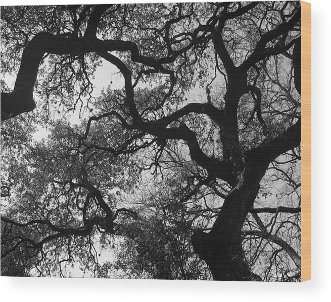 Tree Branches Wood Print featuring the photograph Tree Gazing by Lindsey Orlando
