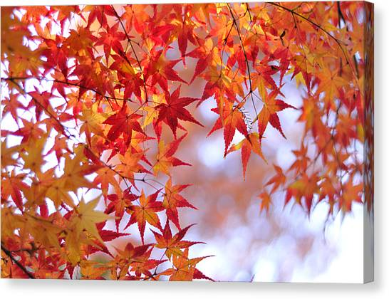 Autumn Leaves Canvas Print - Autumn Leaves by Myu-myu