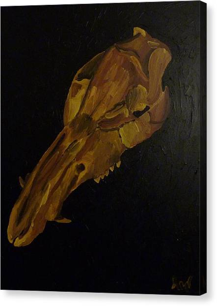 Boar's Skull No. 3 Canvas Print