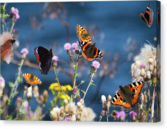 Butterflies Sitting On Flower Canvas Print by www.WM ArtPhoto.se