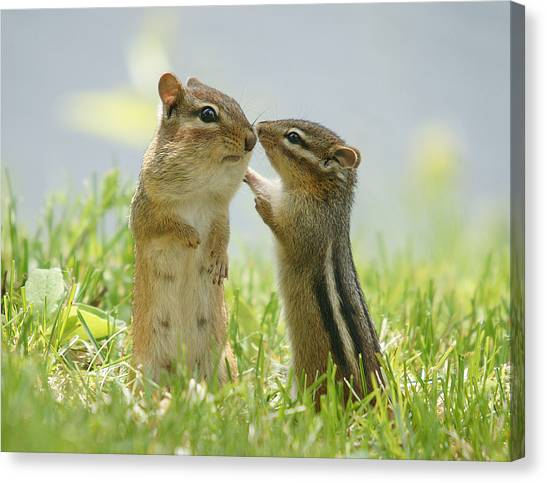 Wild Canvas Print - Chipmunks In Grasses by Corinne Lamontagne