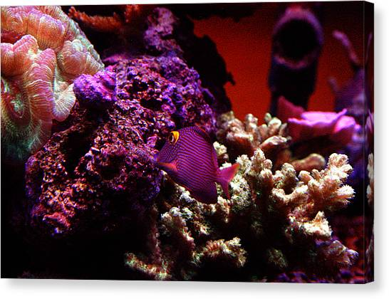 Colors Of Underwater Life Canvas Print