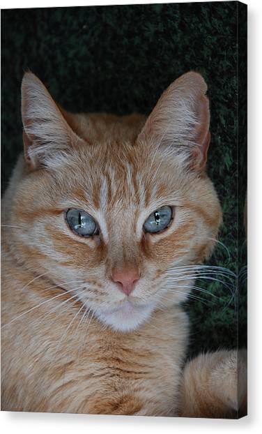 Fat Cats Of Ballard 5 Canvas Print