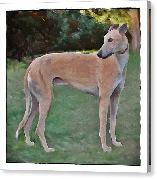 Greyhound Standing Rendered 103 Canvas Print by Terry Mulligan