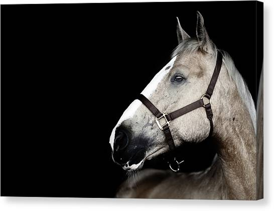 Cut-outs Canvas Print - Horse by Arman Zhenikeyev - professional photographer from Kazakhstan