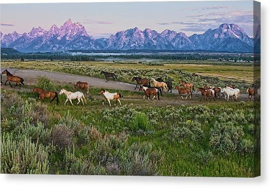 Mountain Ranges Canvas Print - Horses Walk by Jeff R Clow