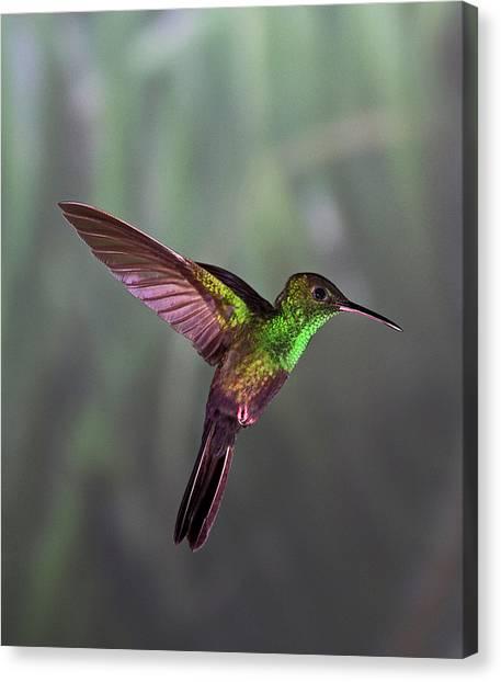 Animal Themes Canvas Print - Hummingbird by David Tipling
