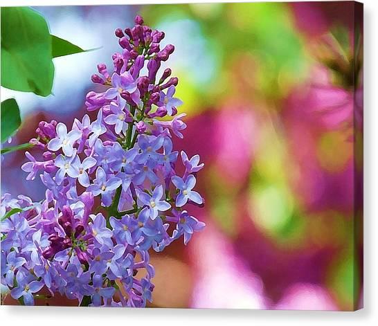 Lilacs 2012 Canvas Print