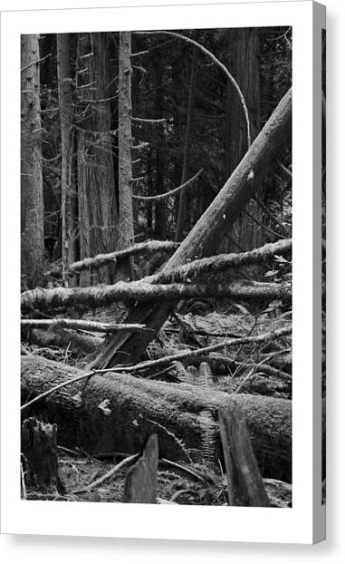 Natural Forest Canvas Print by J D Banks