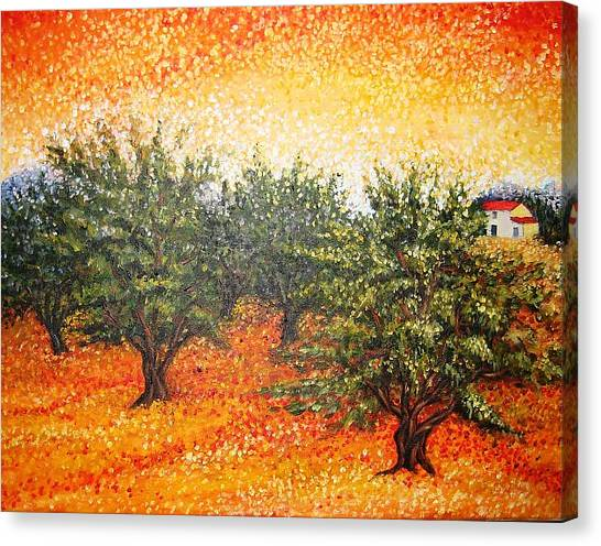 Olive Field In The Sunset Canvas Print