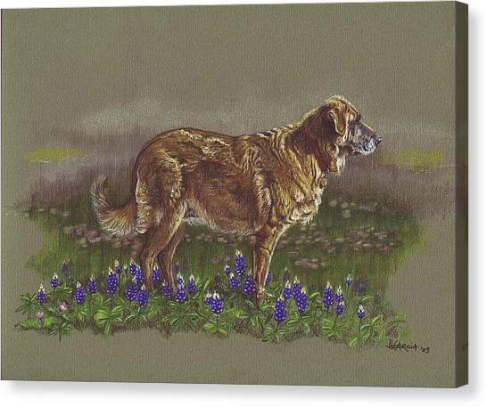 Sasha In The Bluebonnets - Leonberger Canvas Print