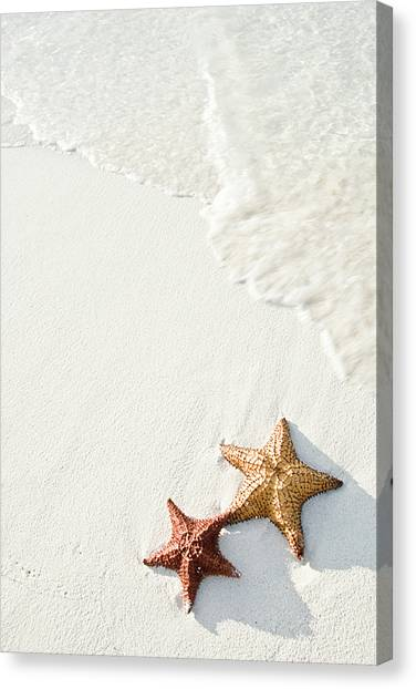 Sands Canvas Print - Starfish On Tropical Beach by Mehmed Zelkovic