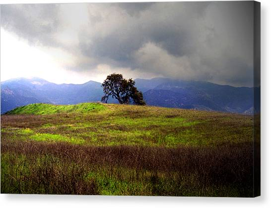 The Last Oak Canvas Print