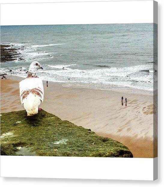 Sand Castles Canvas Print - The Pigeon Observes The People Walking by Michael Comerford