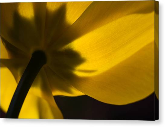 Tulip Consciousness Wide Canvas Print by Shawn Young
