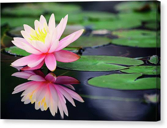 Leaf Canvas Print - Water Lily In Lake by Anakin Tseng