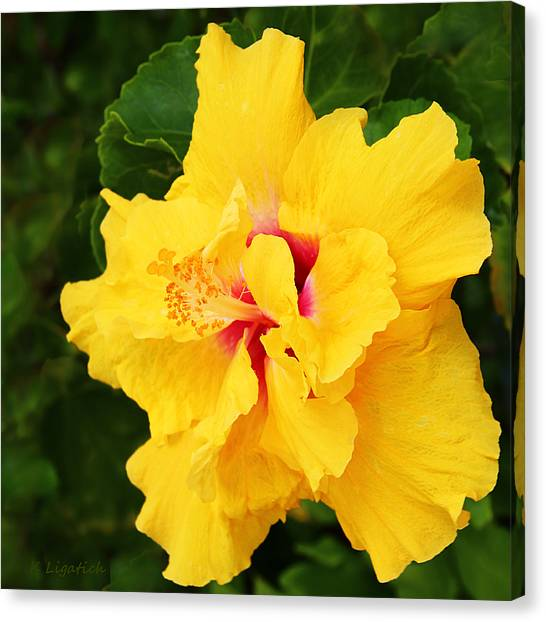 Yellow Double Hibiscus Canvas Print