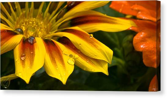 Yellow Drops Canvas Print