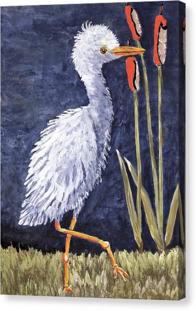 Young Egret Takes A Walk Canvas Print