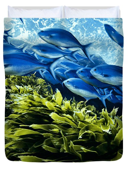 A School Of Blue Maomao Swim Duvet Cover by Brian J. Skerry