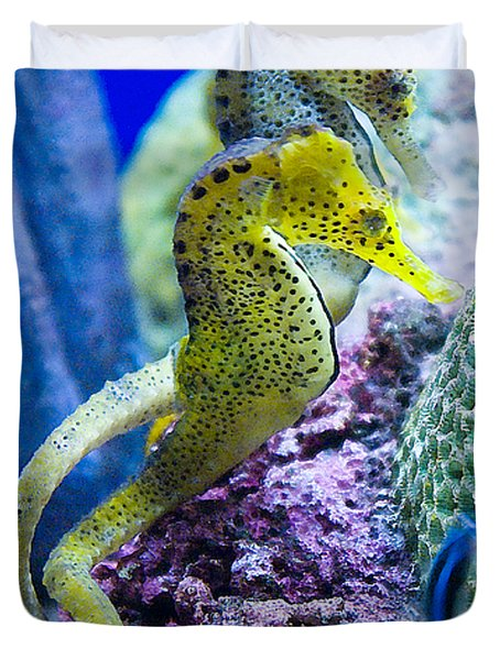 Colorful Seahorses Duvet Cover by Jim And Emily Bush